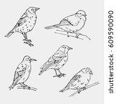 birds engraved style.oriole ... | Shutterstock .eps vector #609590090