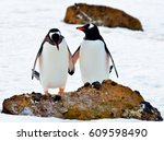 Antarctica, penguins /  Let