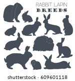 rabbit  lapin breed icon set.... | Shutterstock .eps vector #609601118