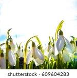 the snowdrops. snowdrop   the...   Shutterstock . vector #609604283