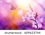 Butterfly And Cherry Blossoms