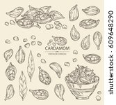 collection of cardamom  seeds ...   Shutterstock .eps vector #609648290
