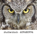 Great Horned Owl Close Up...