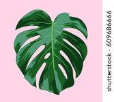 monstera tropical leaf... | Shutterstock .eps vector #609686666