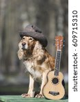 Small photo of Dog spaniel of golden color with a ukulele