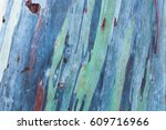 Close Up Colorful Bark Of The...