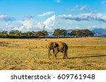 lone asian elephant walking in... | Shutterstock . vector #609761948