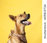 happy  curious dog mixed breed  ... | Shutterstock . vector #609815726
