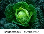 close up green cabbage in the...   Shutterstock . vector #609864914