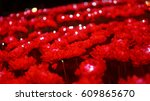 Red Flowers Of The Night