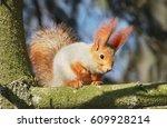 Albino Squirrel On A Branch.