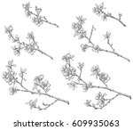 a set of flowering branches of... | Shutterstock .eps vector #609935063