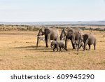 elephants in africa | Shutterstock . vector #609945290
