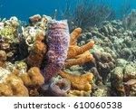 Small photo of Coral reef underwaterAzure Vase Sponge ,Callyspongia plicifera