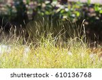 summer grass field in sunny day ... | Shutterstock . vector #610136768