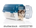 Stock photo cute siberian husky puppy in travel box on white background isolated 610222730