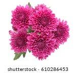 purple flower isolated on white ... | Shutterstock . vector #610286453