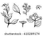 set of hand drawn branches with ... | Shutterstock .eps vector #610289174