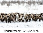 reindeers migrate for a best... | Shutterstock . vector #610320428