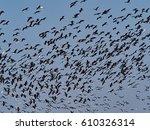 flock of birds  plegadis... | Shutterstock . vector #610326314