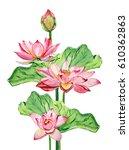 watercolor lotus decorative... | Shutterstock . vector #610362863