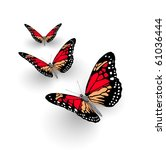 Butterflys Isolated On White....