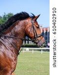 portrait of brown sport horse... | Shutterstock . vector #610402910