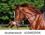 portrait of brown sport horse... | Shutterstock . vector #610402934