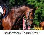 portrait of brown sport horse... | Shutterstock . vector #610402943