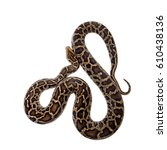 Burmese Python  Python Molurus...