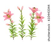 pink lilies with green stem and ... | Shutterstock .eps vector #610443344