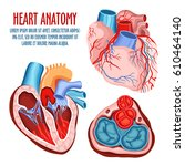 anatomy of heart  human... | Shutterstock .eps vector #610464140