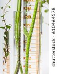 test tubes with plants | Shutterstock . vector #610464578