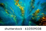 Deep Down. Underwater Image Of...