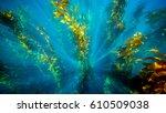 Deep Down. Underwater Image Of...