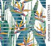 watercolor strelitzia seamless...   Shutterstock . vector #610577666