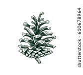 hand drawn pine cone... | Shutterstock .eps vector #610678964
