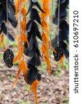 Black And Orange Dreamcatcher...