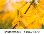 Spring Flowers Tree Background