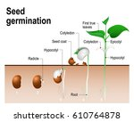 seed germination. | Shutterstock .eps vector #610764878