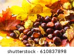 autumn chestnuts on autumn... | Shutterstock . vector #610837898