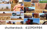 production of wheat  collage.... | Shutterstock . vector #610904984
