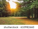 sunrise in beautiful park | Shutterstock . vector #610982660