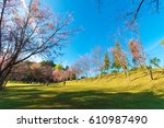 cherry blossom trees at doi pha ... | Shutterstock . vector #610987490