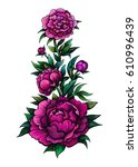 vector color peony flowers... | Shutterstock .eps vector #610996439
