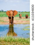 Small photo of Huge male African elephant