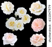 Stock photo collage of white roses isolated on black background 611047979