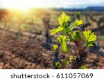 close up of young grapevines... | Shutterstock . vector #611057069
