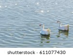 geese swimming together in a... | Shutterstock . vector #611077430
