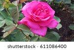 Stock photo roses roses roses 611086400